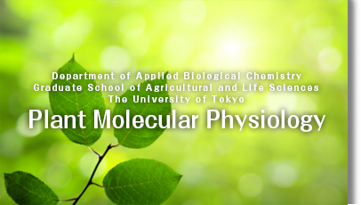 Department of Applied Biological ChemistryGraduate School of Agricultural and Life SciencesThe University of Tokyo	Plant Molecular Physiology